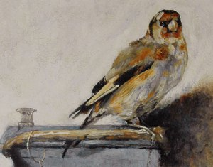 goldfinch-detail